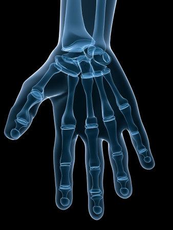 skeleton hand: skeletal hand