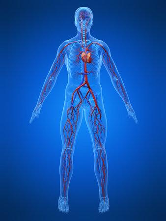 clogged: cardiovascular system