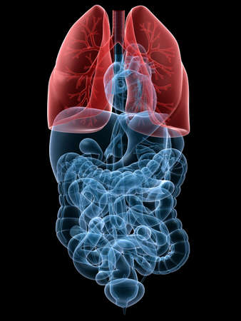 lungcancer: human highlighted lung Stock Photo