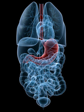 lungcancer: human highlighted stomach