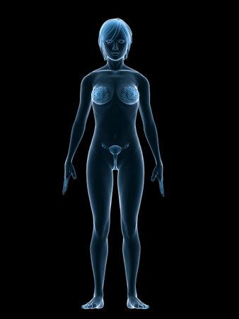 maternal: female  organs