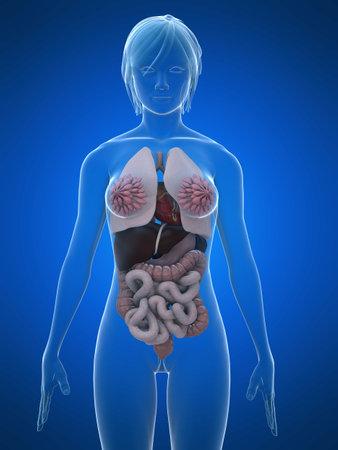 female anatomy photo