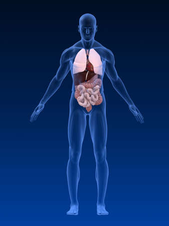 body shape: forma del corpo maschile con