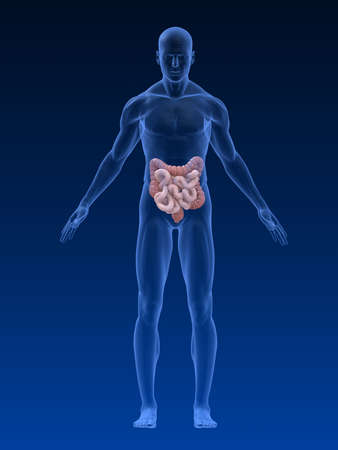 intestines: male body shape with colon and intestines Stock Photo
