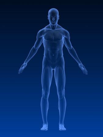 body shape: forma del corpo maschile Archivio Fotografico