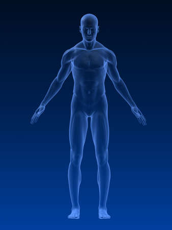 transparent male anatomy: male body shape