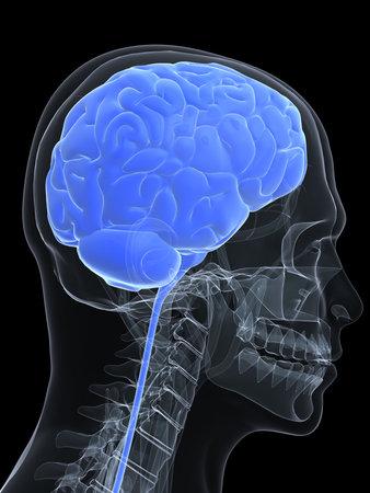 human head shape with brain Stock Photo - 4696251