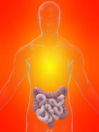 transparent body with intestines Stock Photo - 4696085