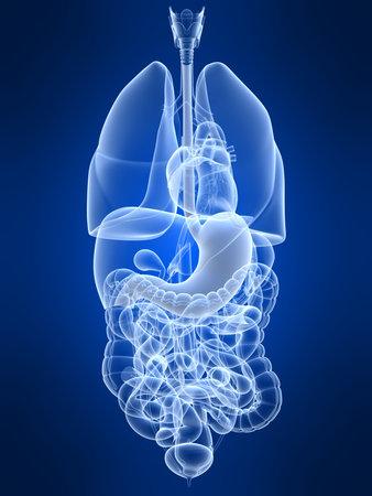 cirrhosis: human stomach Stock Photo