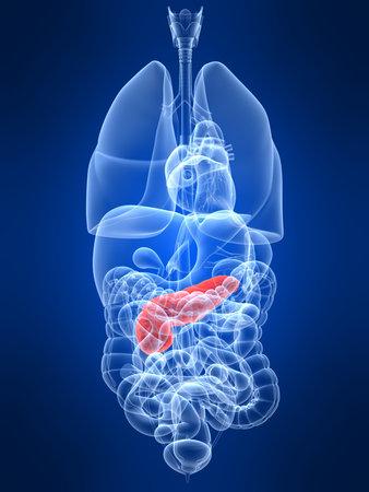 trzustka: przejrzysty organami ludzkimi z podświetloną trzustki Zdjęcie Seryjne