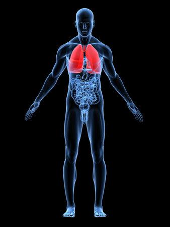 polmone: trasparente corpo maschile con evidenza polmonare Archivio Fotografico