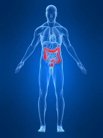 highlighted: transparente con el cuerpo masculino destac� colon