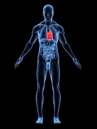 corazones azules: transparente cuerpo masculino destac� con coraz�n