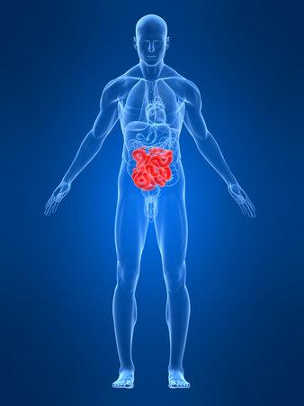 intestines: cuerpo de hombre transparente con los intestinos de relieve Foto de archivo