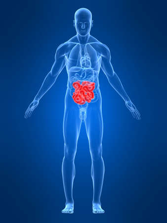 irritable bowel syndrome: transparent male body with highlighted intestines Stock Photo
