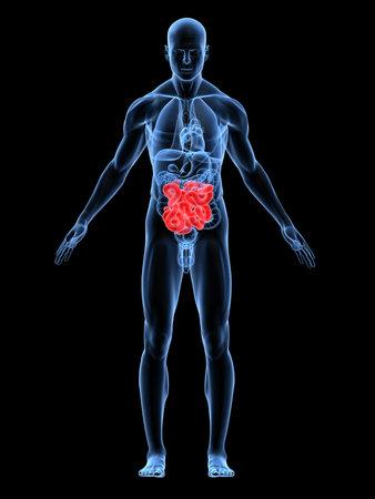 intestines: transparente cuerpo masculino destac� con los intestinos Foto de archivo