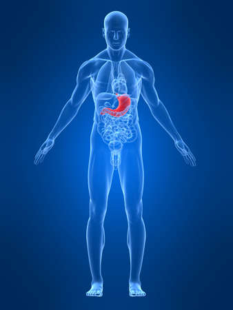 transparent male body with highlighted stomach Standard-Bild