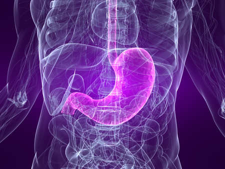 gastric: highlighted stomach Stock Photo