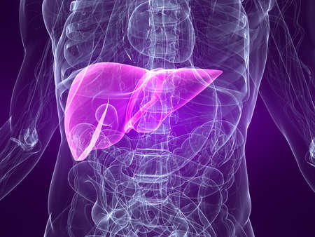 inflammated: highlighted liver