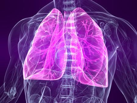 polmone: evidenziato polmonare