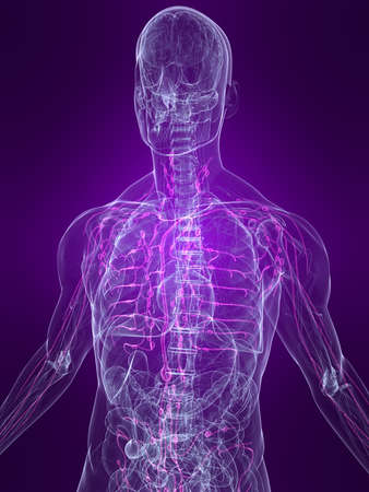 transparent human body with highlighted lymphatic system Stock Photo