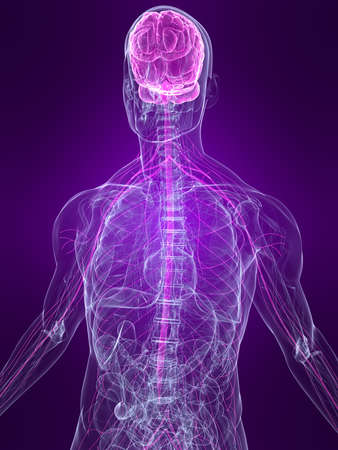 transparent human body with highlighted nervous system photo