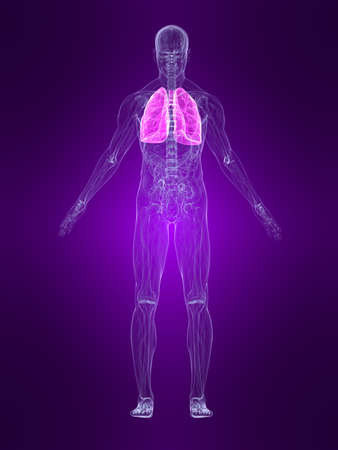 transparent human body with highlighted lung Stock Photo - 4683143