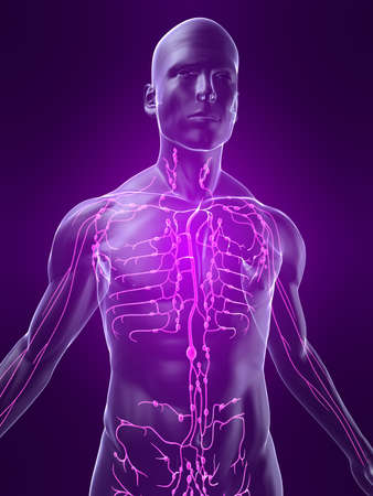 highlighted lymphatic system Stock Photo - 4683115