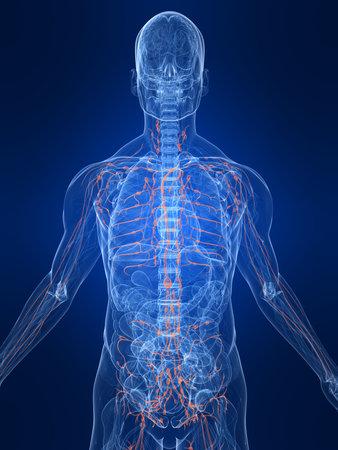 destacó el sistema linfático
