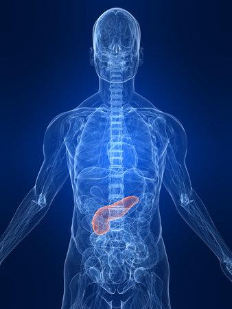 pankreas: hervorgehoben Bauchspeicheldr�se Lizenzfreie Bilder