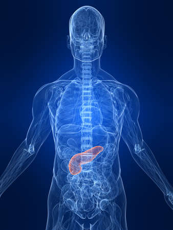 highlighted pancreas Stock Photo - 4683166