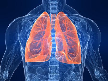 pulmon sano: destac� pulm�n