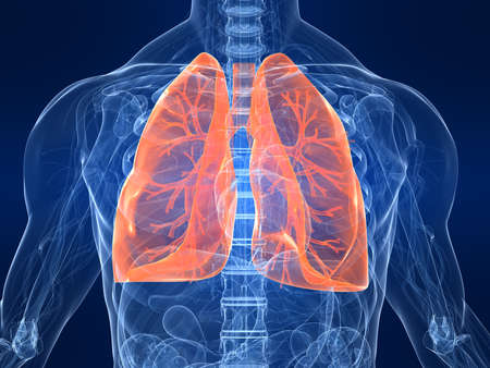 lung: highlighted lung