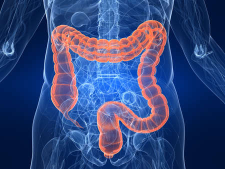 intestino: destac� colon
