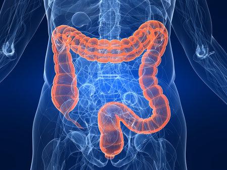 intestin: mis en �vidence deux points