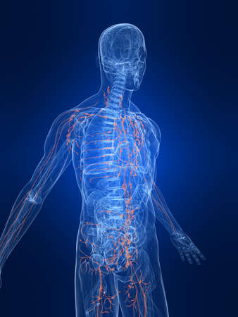 highlighted lymphatic system photo