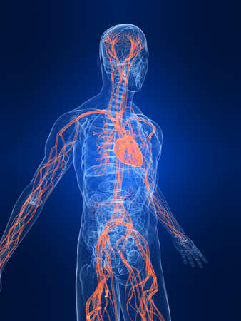 inflammated: highlighted vascular system