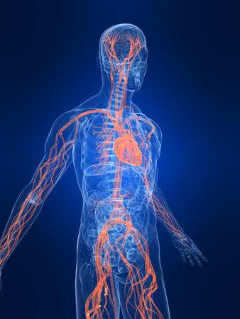heartattack: highlighted vascular system