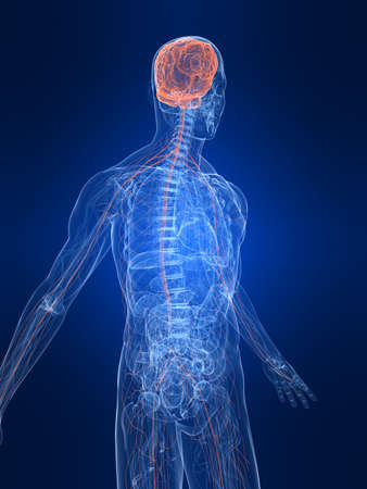 highlighted nervous system Stock Photo - 4683158