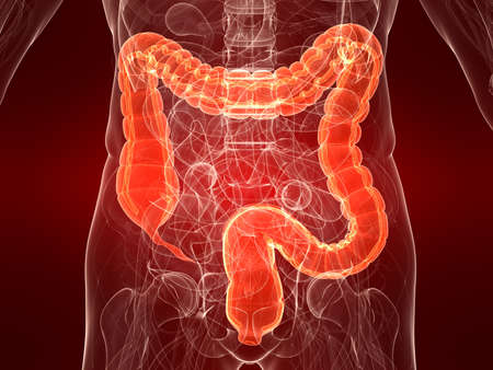digestive health: highlighted colon