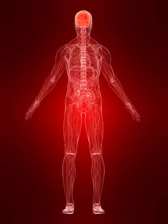 inflammation: nervous system