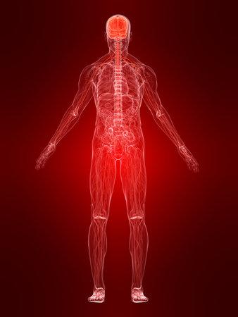nervios: sistema nervioso Foto de archivo