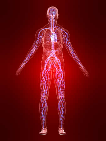 vascular system Stock Photo - 4683140