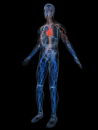 inflammated: vascular system