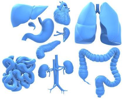 intestino: �rgano gr�fico Foto de archivo