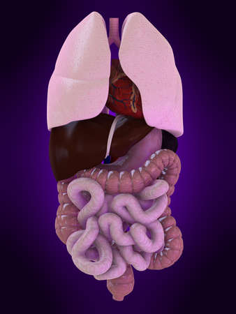 inflammated: human organs