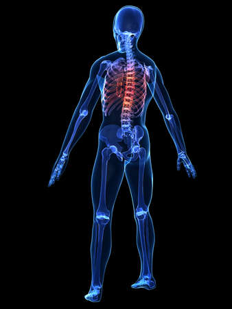 human skeleton with painful back Stock Photo
