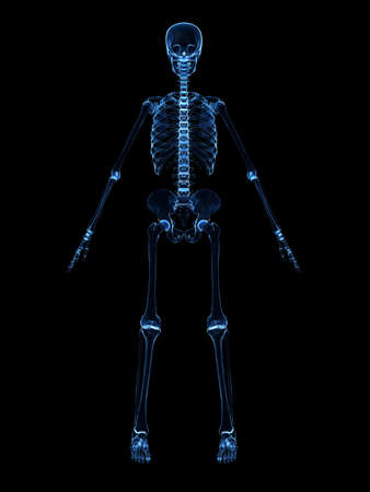 radiograf�a del esqueleto humano Foto de archivo - 4716078