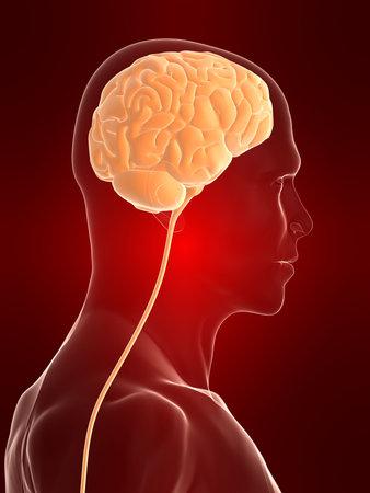 cerebrum: transparent human head shape with brain