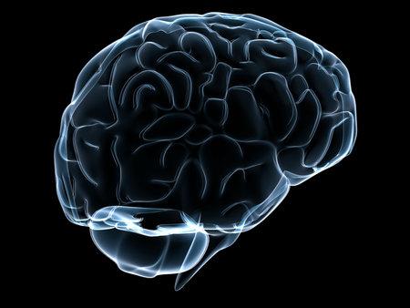 cerebrum: transparent human brain Stock Photo